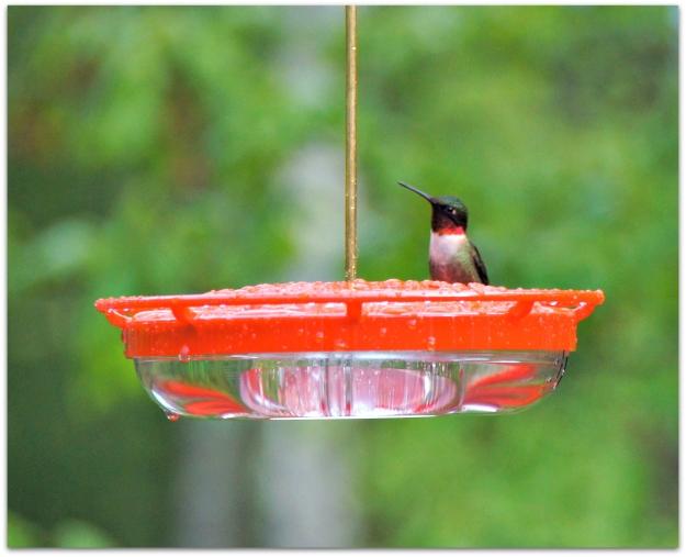 Pensive hummingbird