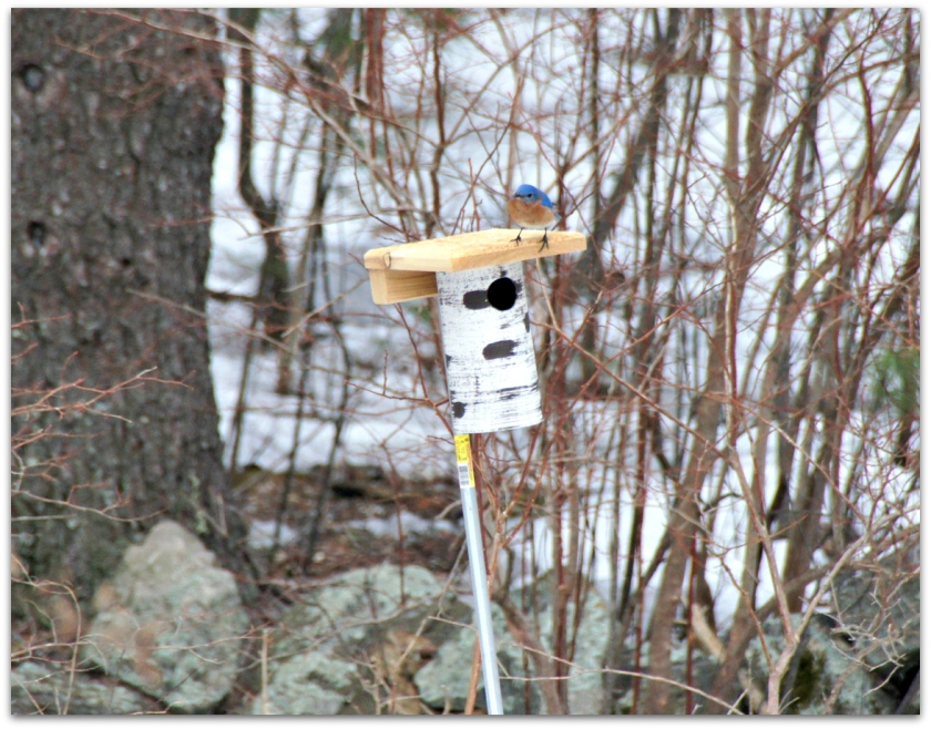 Gilbertson bluebird house