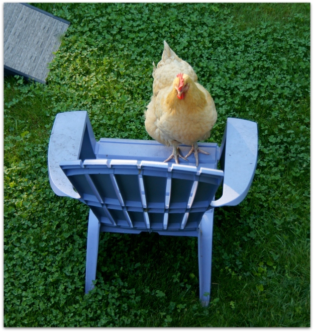hen chair