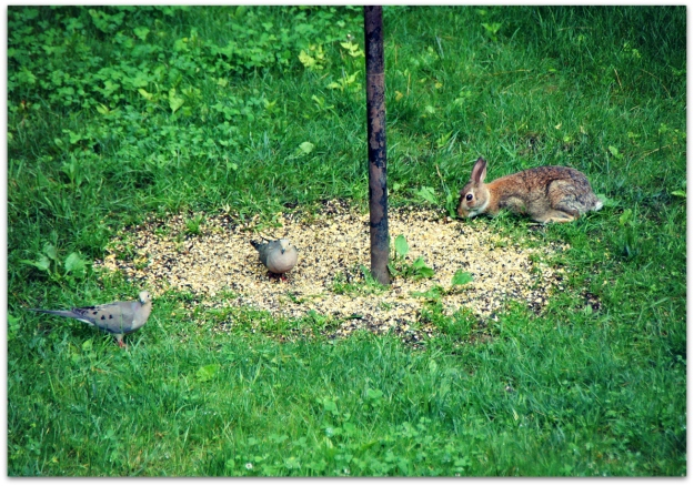 rabbit and doves