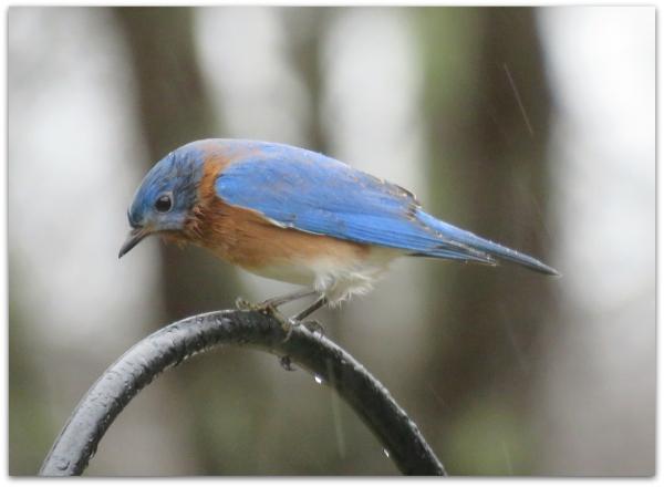 wetbird