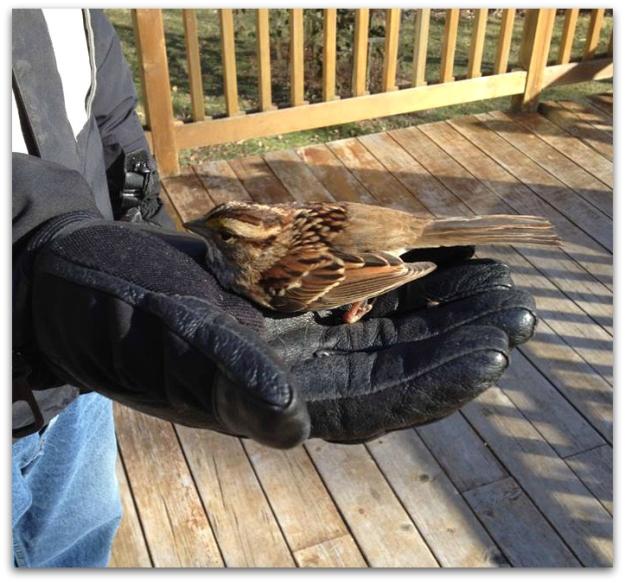 bird glove