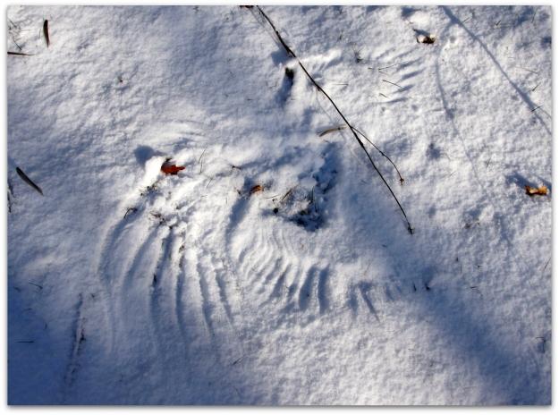 hawk wings snow