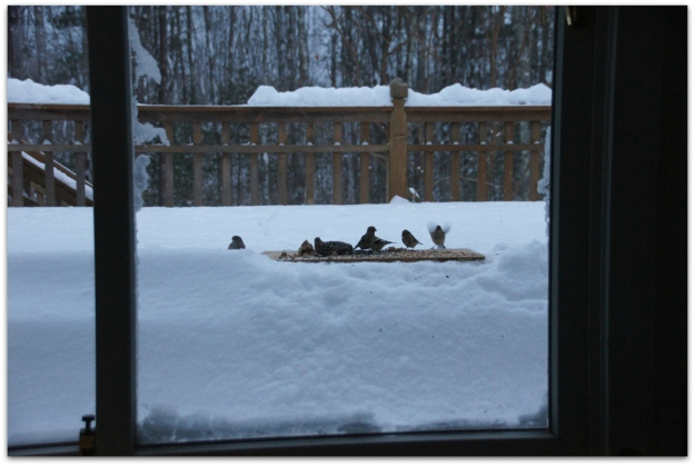 plywood plank bird feeder