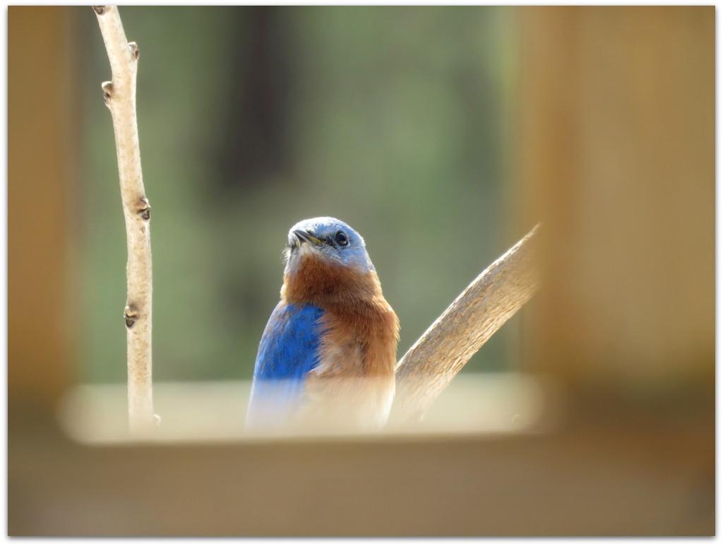 porch blue