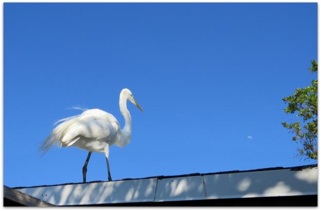 roof moon egret