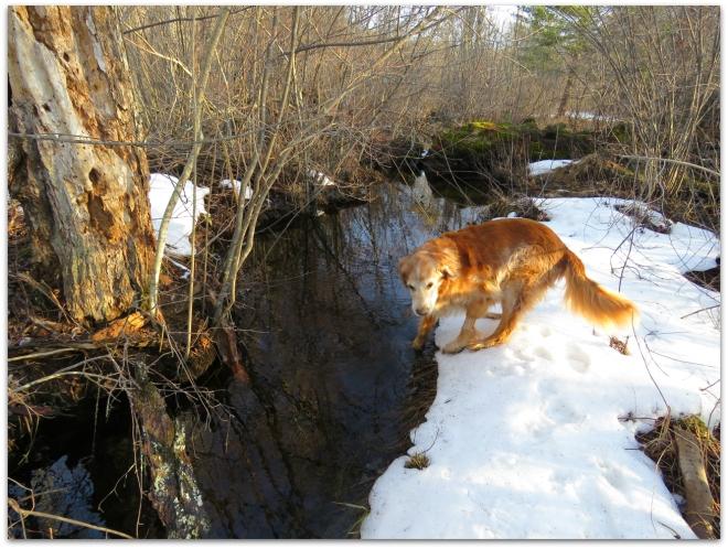 creek dawg