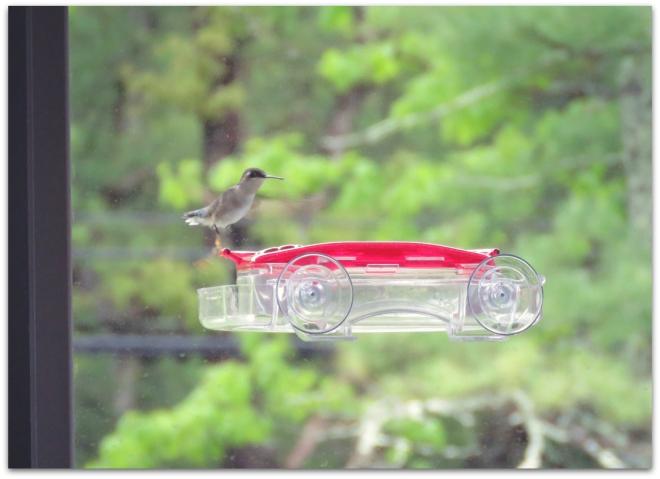 hummingbird window feeder
