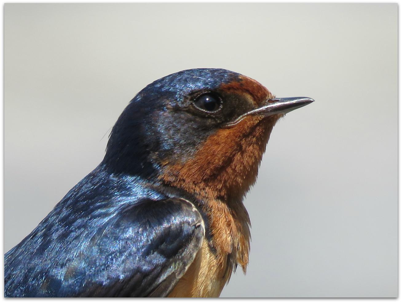 may 2015 u2013 amy u0027s birds