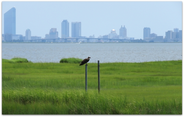 osprey atlantic city