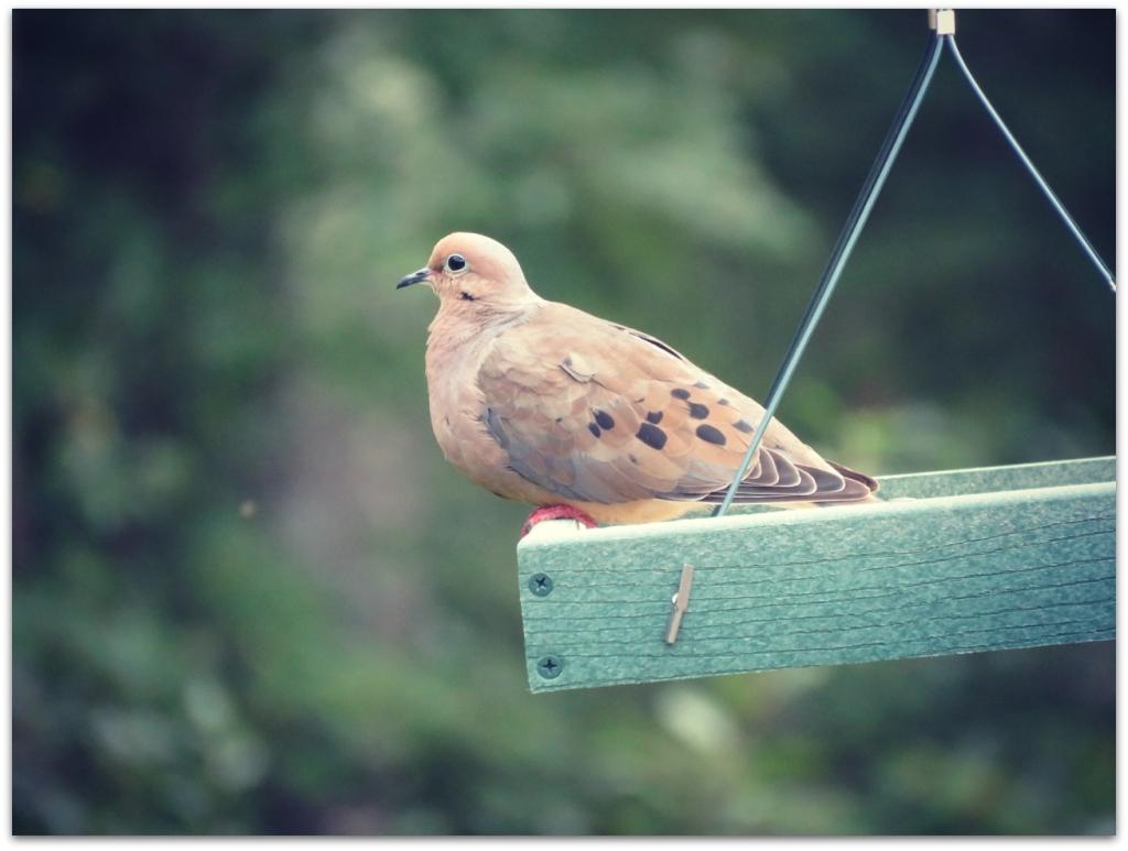 dove swing