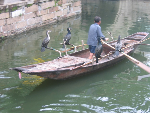 Cormorant_fishing_-Suzhou_-China-6July2005