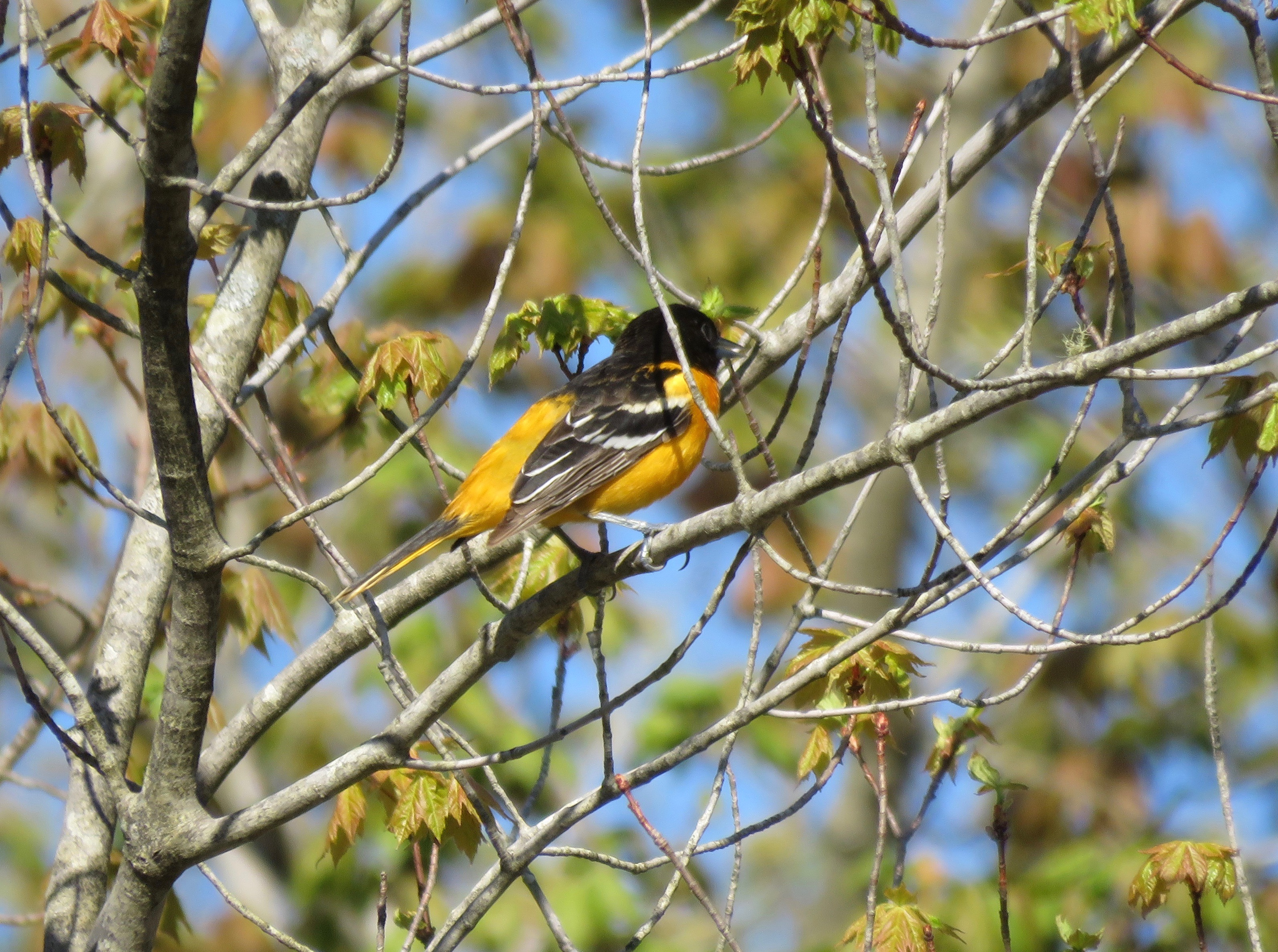 Tomando 'Birdland' a un nuevo nivel - Baltimore Sun