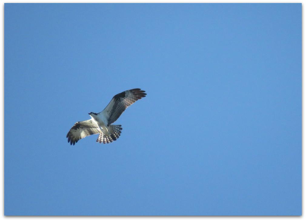 Native Birds Norfolk Island