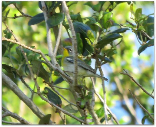 smallbird-2