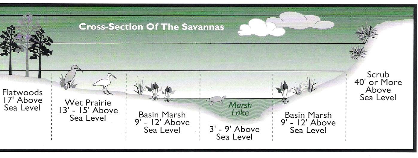 savannas-cross-section_orig