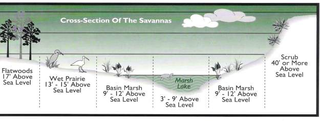 savannas-cross-section_orig