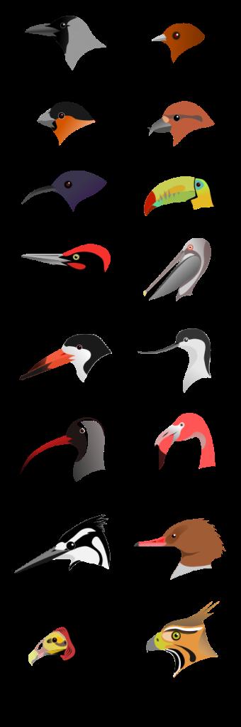 BirdBeaksA.svg