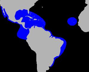 Magnificent_frigatebird_(Fregata_magnificens)_distribution_map_HBW.svg